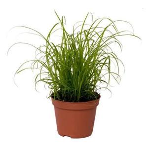 Mini Cat Kitten Grass