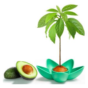 Avocado Planting Set