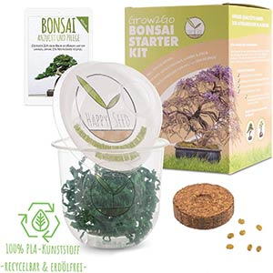Bonsai Tree Kit