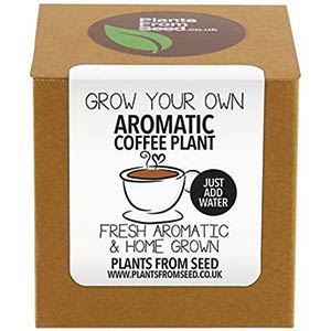 Coffee Plant Kit