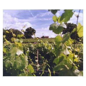 Allpresent Vineyard Wine Tasting Tour for Two