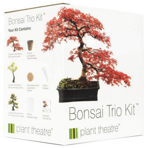 3 Distinctive Bonsai Trees to Grow