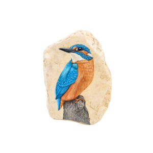 Painted Kingfisher on Rock