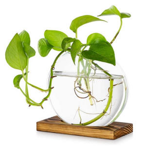Tabletop Hanging Glass Planter