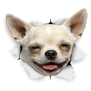 Chihuahua Dog Stickers