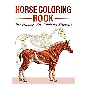 Adult Horse Colouring Book