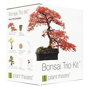 Bonsai Trio Kit