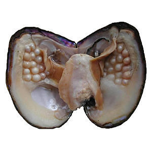 Oyster with Pearls Inside