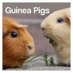2021 Guinea Pig Calendar