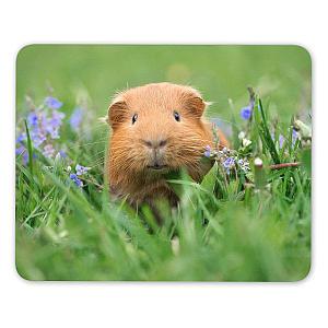 Guinea Pig Mouse Mat