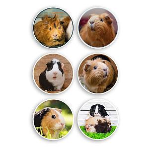 Vinyl Guinea Pig Stickers