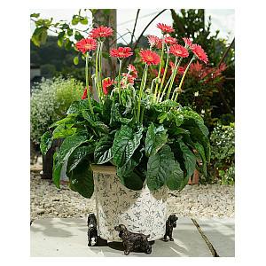 Plant Pot Support